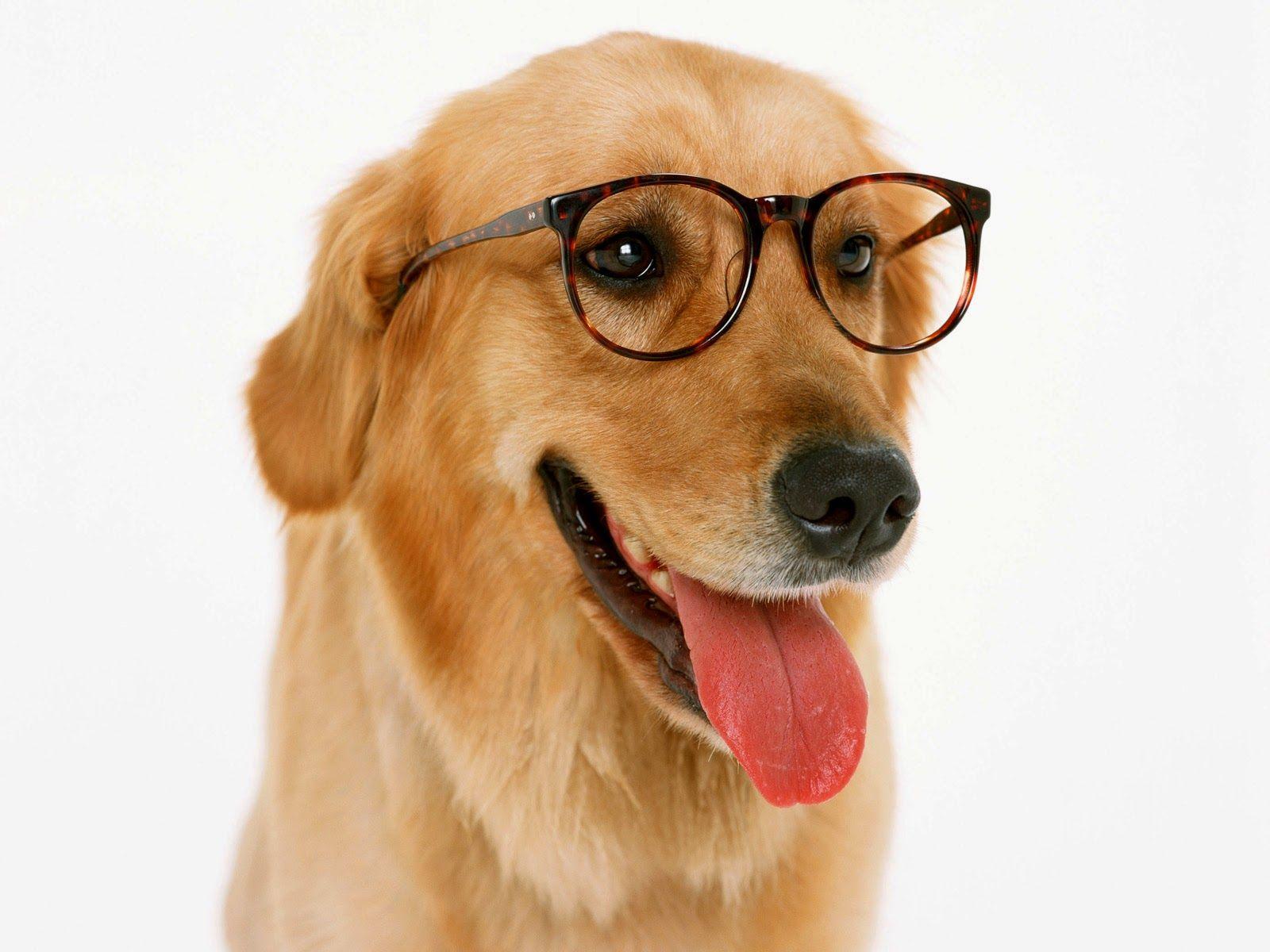 odio a las perras que usan armazones de lentes sin aumento para pegarle al hipster