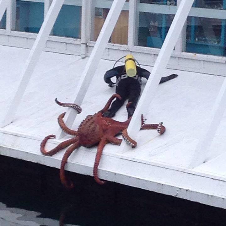 Sir do you have a moment to talk about our lord Cthulu?